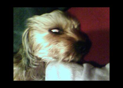 This Dog is POSSESSED!
