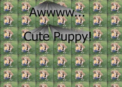 Cute Puppy!