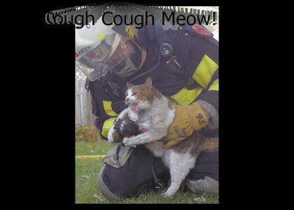 NEDM CAT SAVED...YaaaaY!!!!
