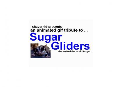Sugar Gliders: A Tribute