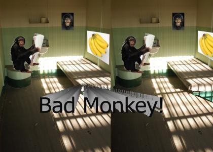 Monkey in Prison