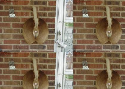 A redneck's doorbell