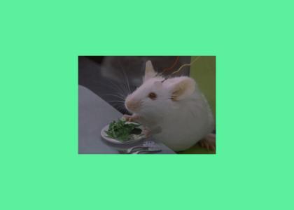 mouse salad