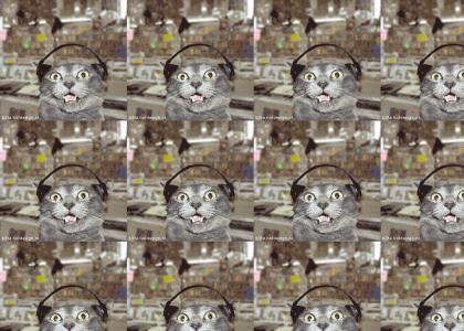 The Techno Cat