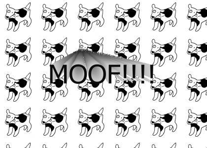 MOOF!!!!!