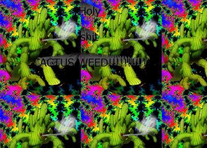 Weed cactus
