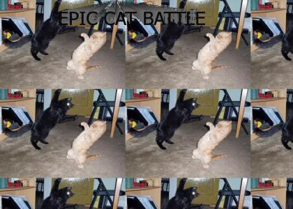 epic cat battle