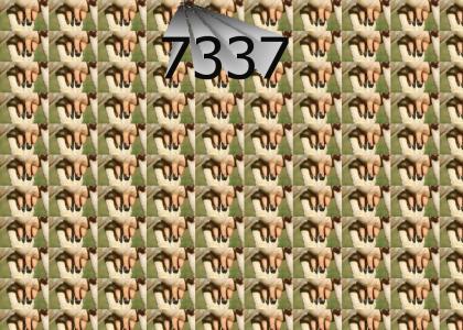 1337 meets it's match