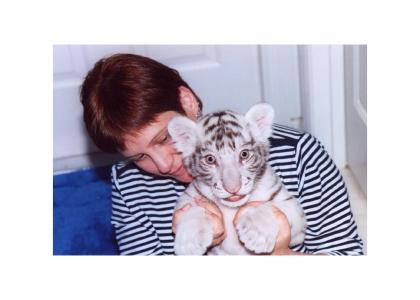 tiger handheld
