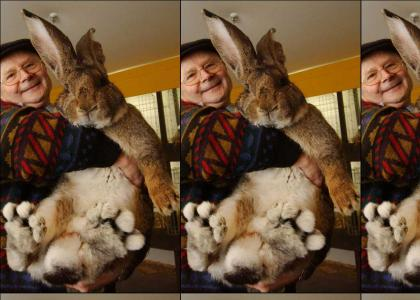 Frank the Giant Bunny Rabbit