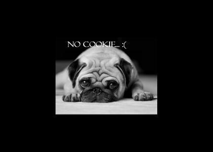 Pug is sad... :(