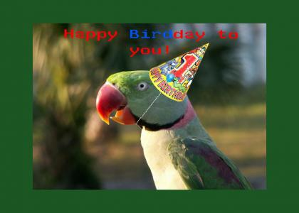 This parrot has a special message for you