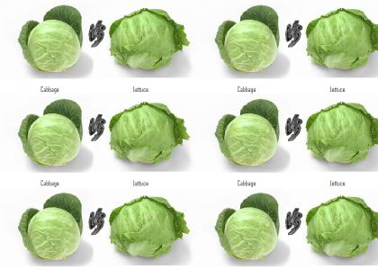 cabbage vs lettuce A breakdown of the nutritional facts of iceberg lettuce, romaine lettuce and kale for good measure how does your favourite leafy green stack up.