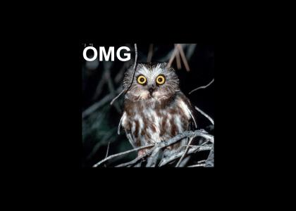 owls chillin'