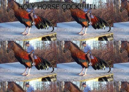 HOLY HORSE COCK