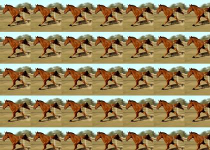 dont break this horses stride!