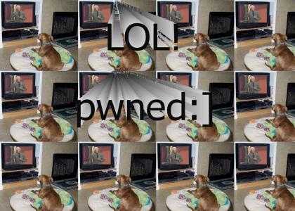 Bob Barker PWNS Pets.