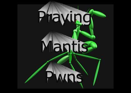 3D Mantis Model