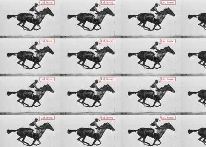 LOL, HORSE!