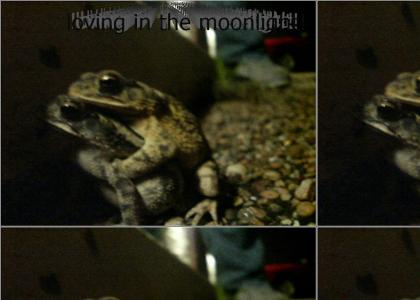 Froggy Style (for real)