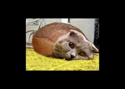 NEDM Sad Cat-Loaf...