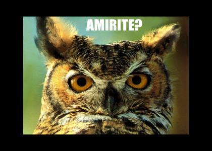 AMIRITE?!?!