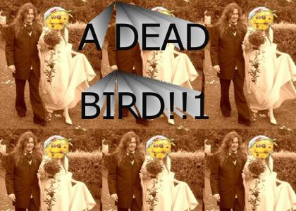 opeth dead bird