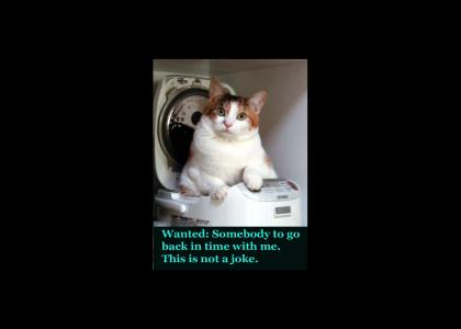 safety not guaranteed kitty style