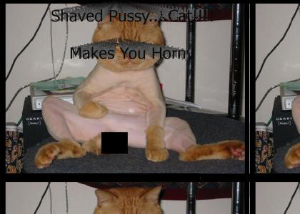 Shaved Pussy (Refresh)