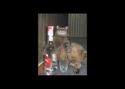 Drunkycat!