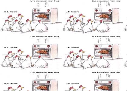 offended chickens