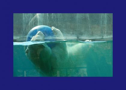 Polar bear still has a blue ball