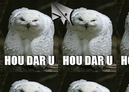 ANGRY OWL IS ANGRYYYY :(