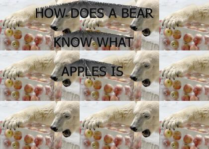 HOW DOES A BEAR KNOW WHAT APPLES IS