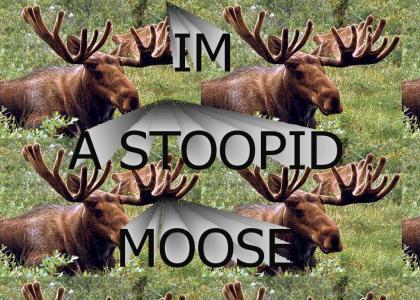 stupid moose