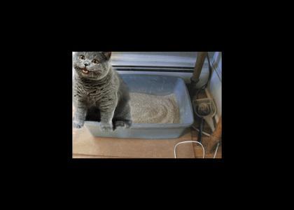 NEDM Cat Drops a Bomb.