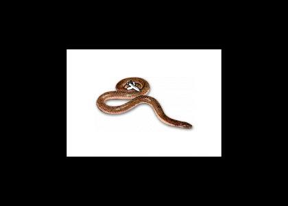 Plane on a Snake!