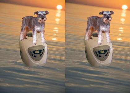 A Schnauzer on a Bread Maker on the Ocean
