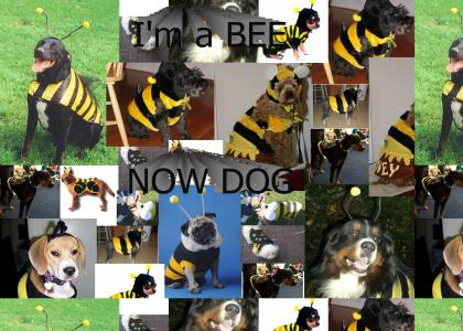 I'm a BEE NOW DOG
