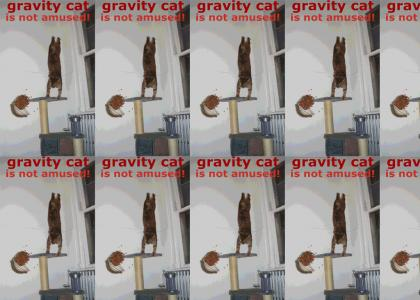 Not Even Gravity Cat