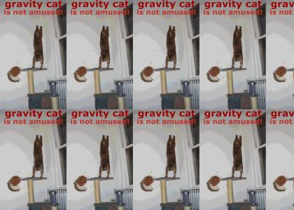 Not Even Gravity Cat