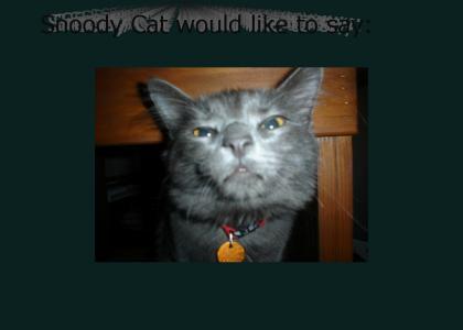 Snoody Cat