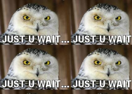 My Fair Lady Owl