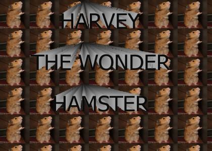 Harvey the Wonder Hamster!