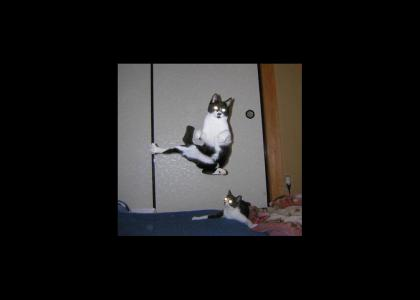 Flying Cats: uaelaelaelalua