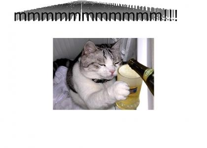 sober kitty