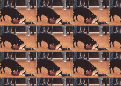 Epic bull Maneuver