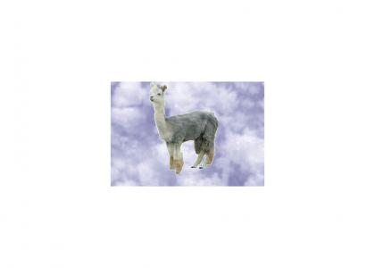 free fallin llama