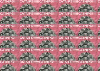 catnipcat!