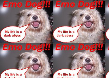 Emo Goes to the Dogs